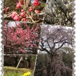 春ですね ~いつものお散歩コース~
