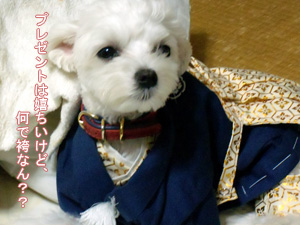 白い小悪魔-羽織袴